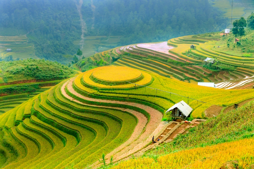 Rice fields on terraced of Mu Cang Chai, Yen Bai, Vietnam
